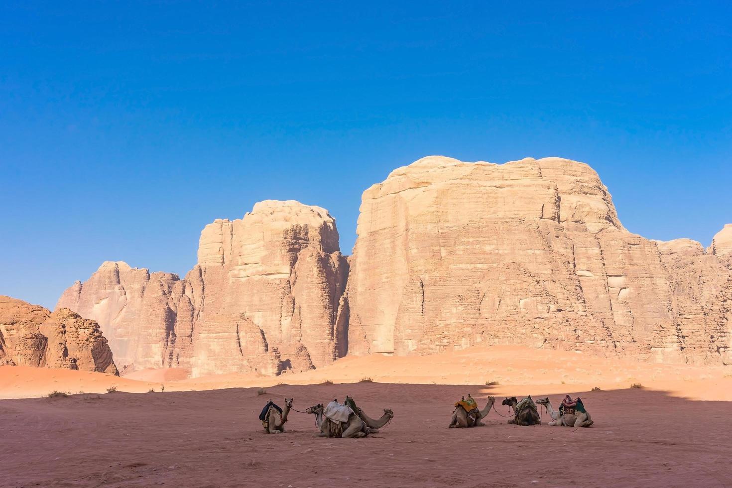 Paysage désertique avec des chameaux dans le Wadi Rum, Jordanie photo