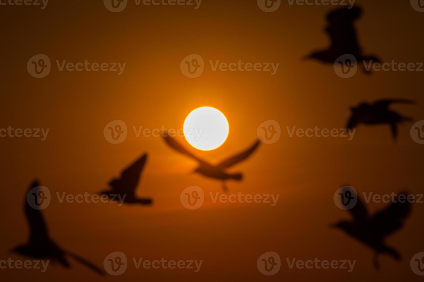 silhouette de mouettes au coucher du soleil photo