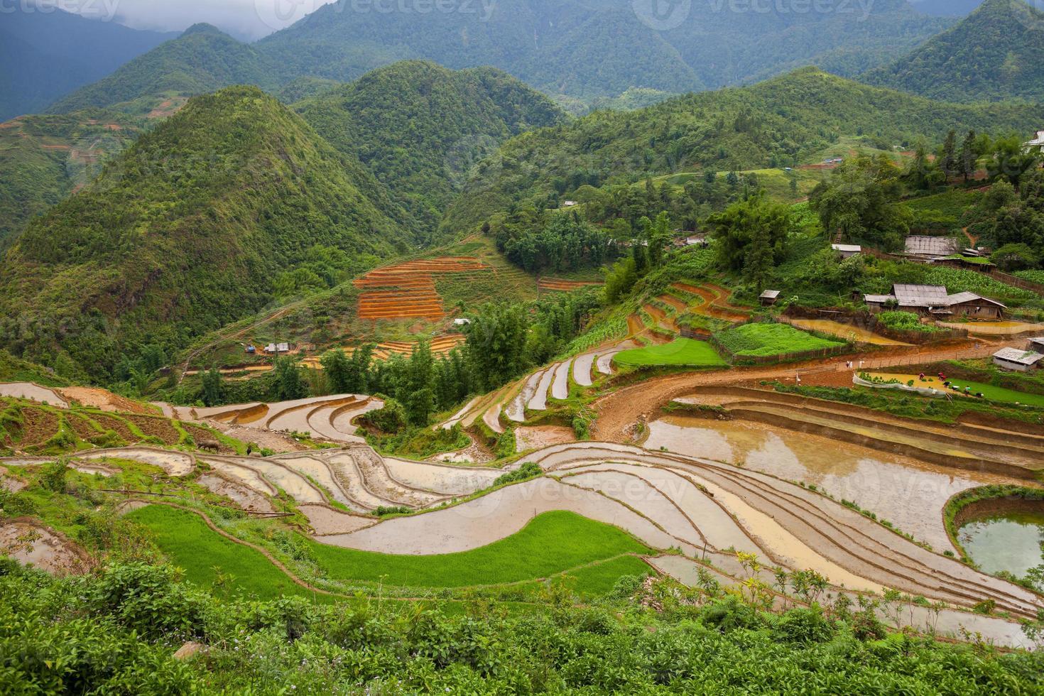 rizières sur les montagnes photo