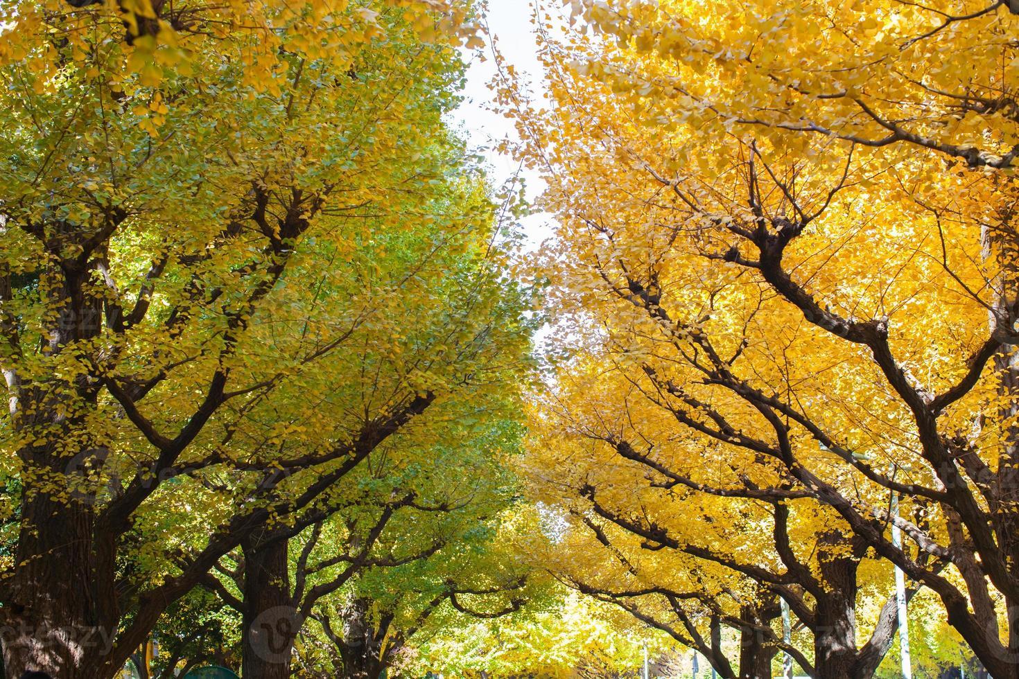 arbres d'automne colorés photo