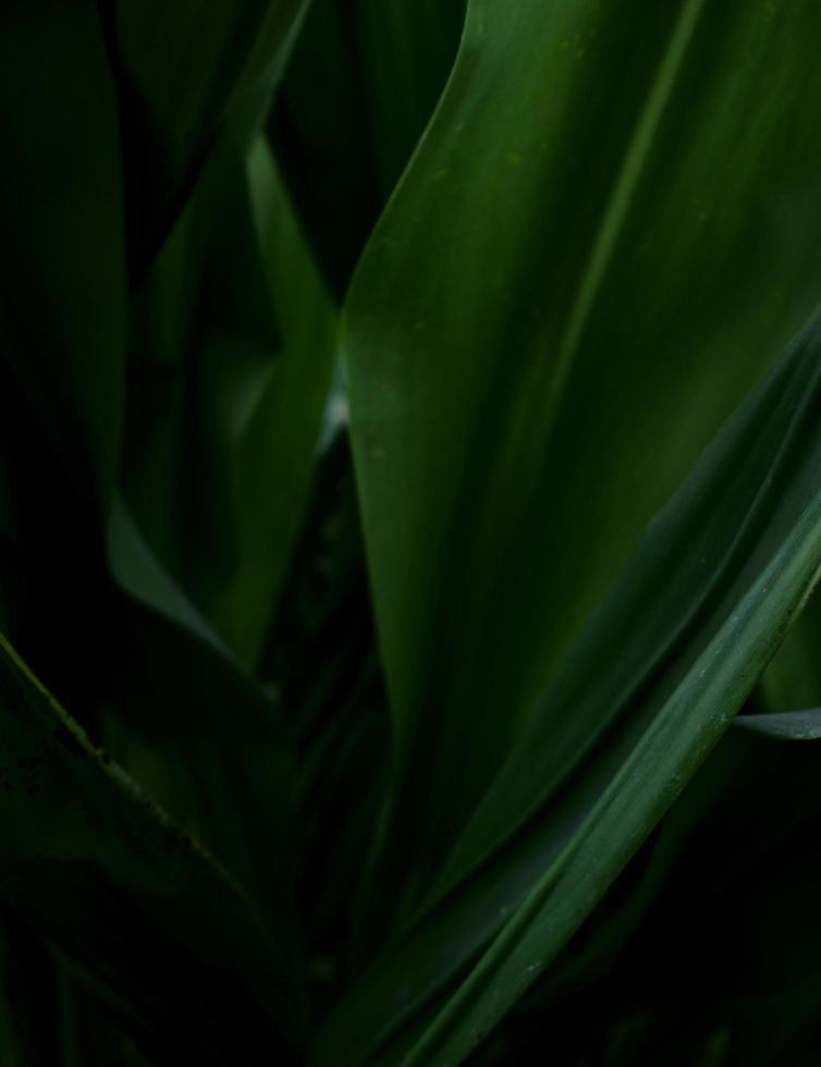 feuilles vertes foncées photo