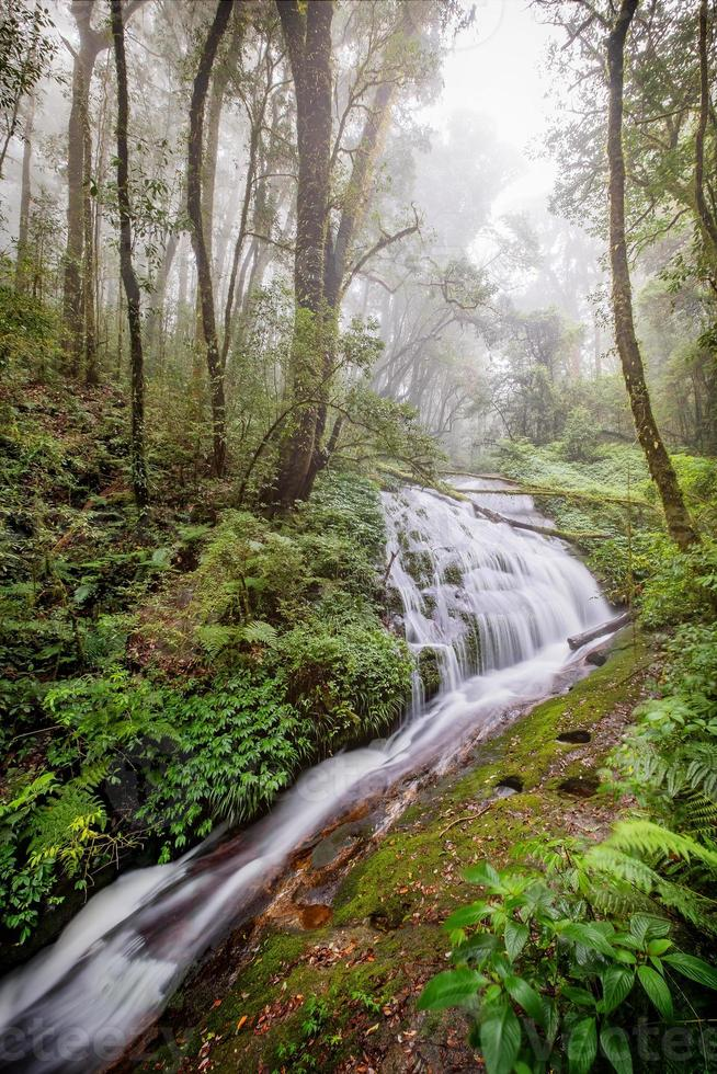 L'eau qui coule au parc national d'Inthanon, Chiangmai, Thaïlande photo