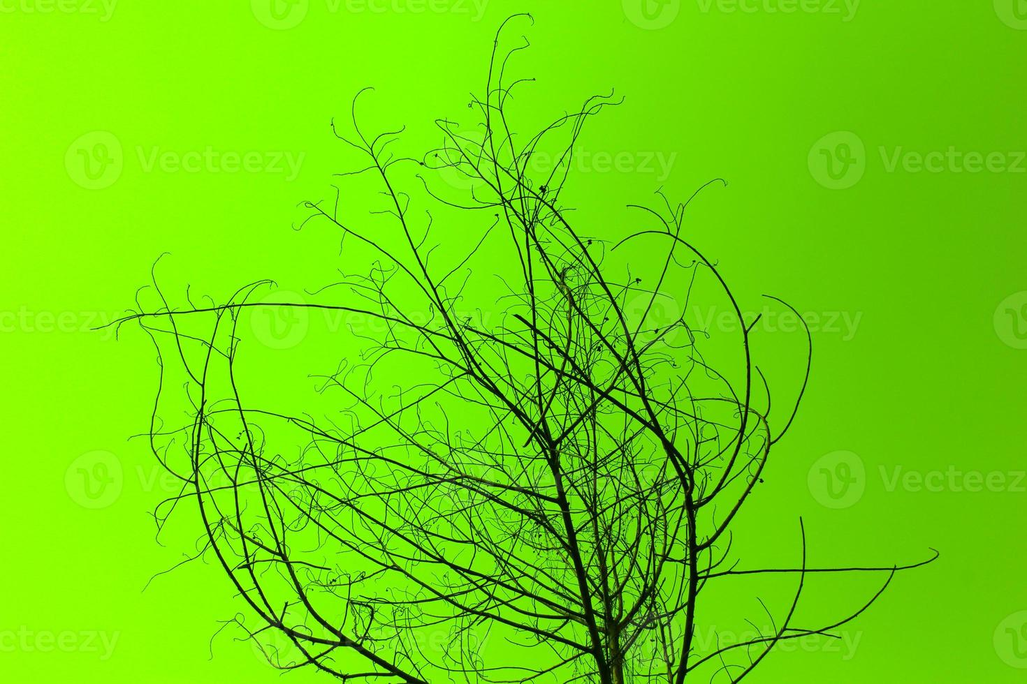 arbre séché sur vert photo