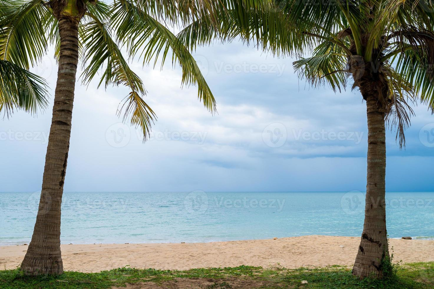 cadre de palmiers avec plage de sable photo