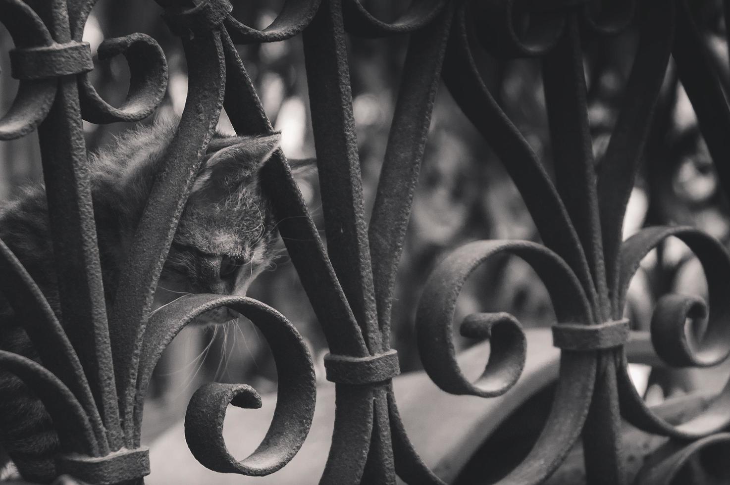 chaton triste derrière la clôture du parc photo