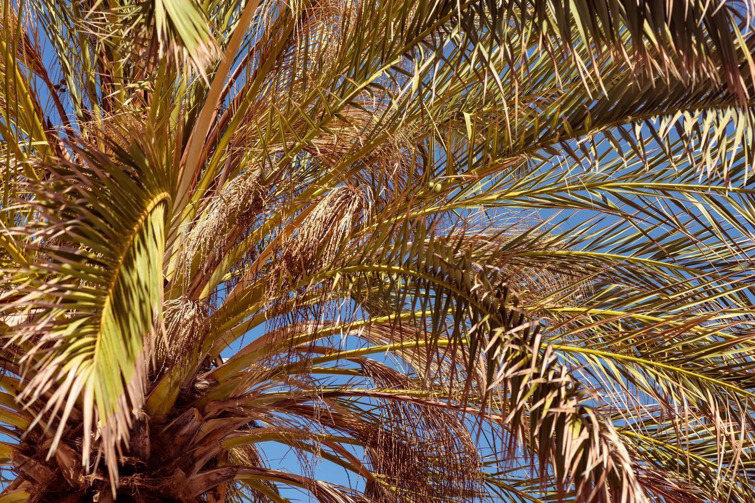 vue rapprochée vers le haut de palmier tropical photo