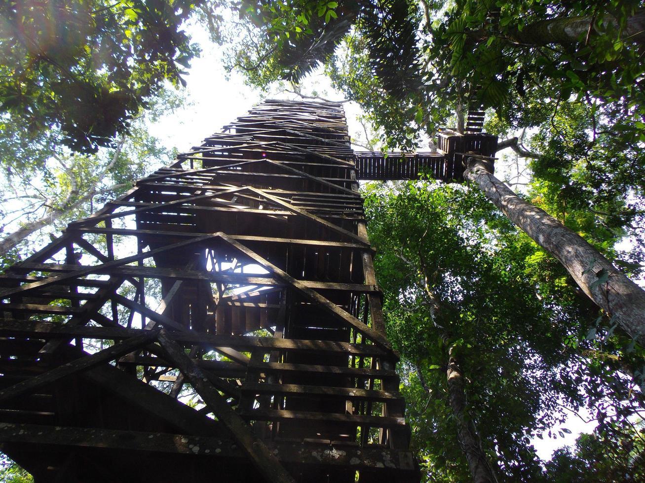 Échelles jusqu'à la canopée des arbres dans la jungle amazonienne photo