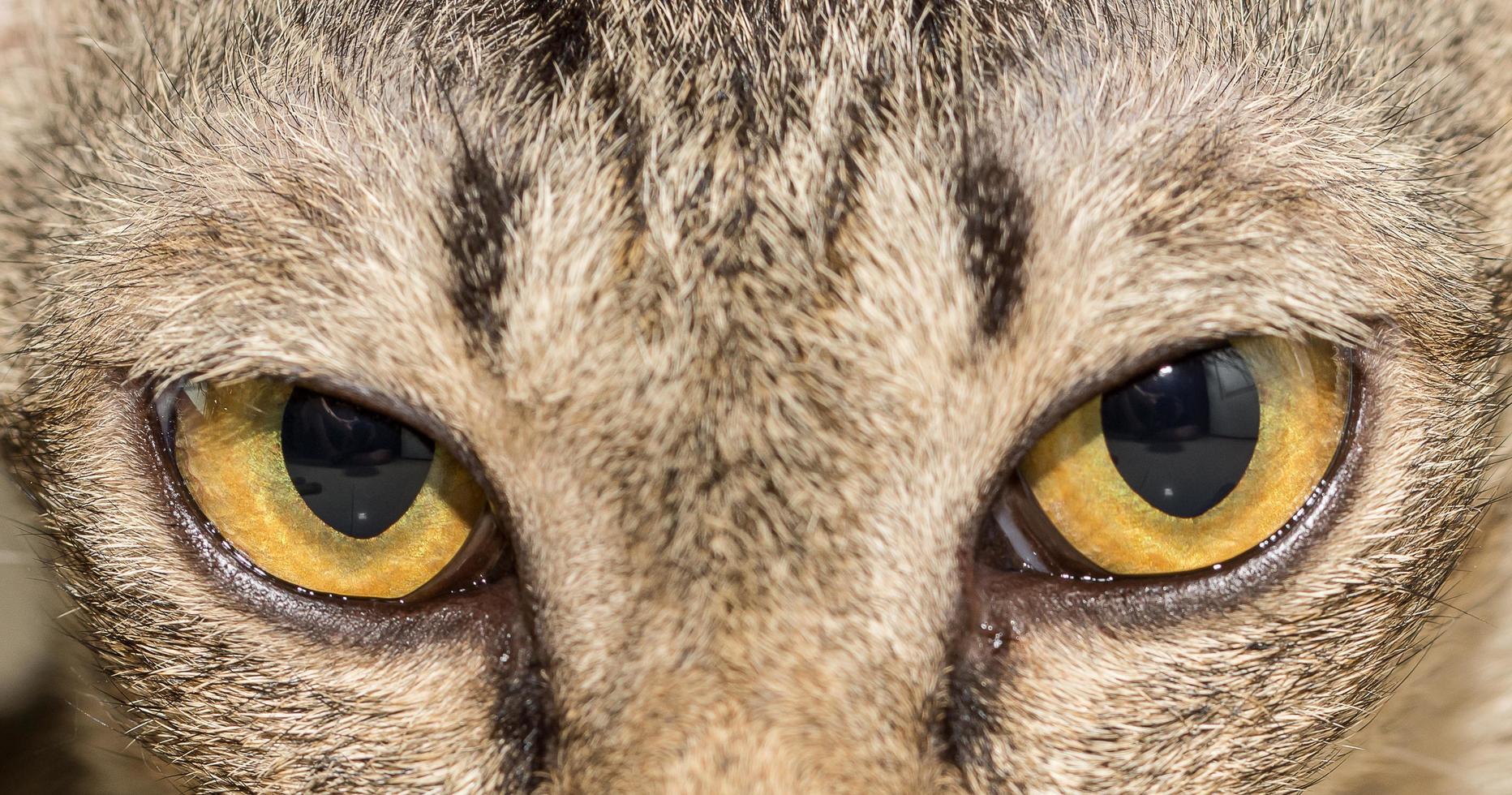 https://static.vecteezy.com/ti/photos-gratuite/p1/2094124-oeil-de-chat-animal-gratuit-photo.jpg