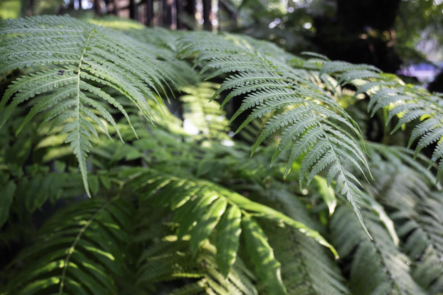 grande plante de fougère dans le jardin photo