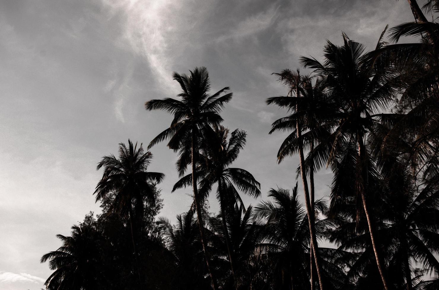palmiers la nuit photo