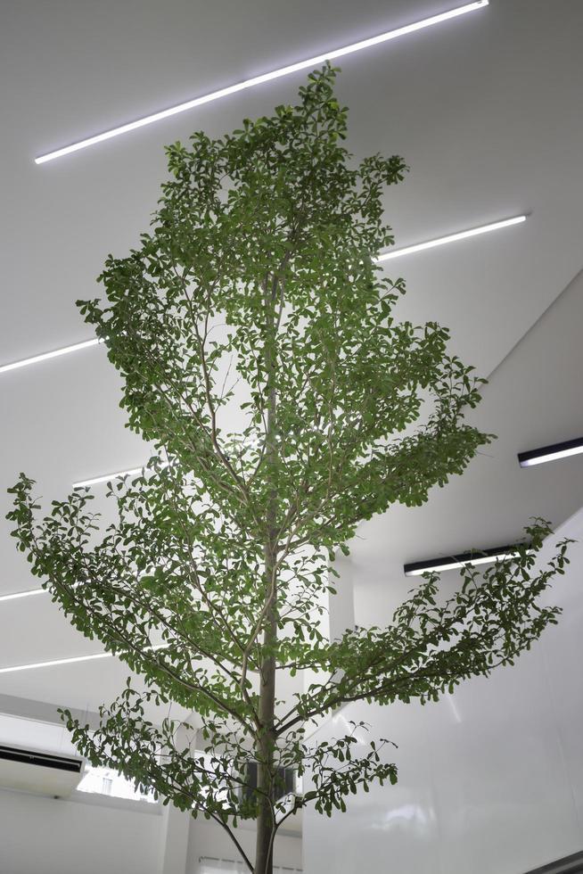 arbre intérieur de la pièce lumineuse photo