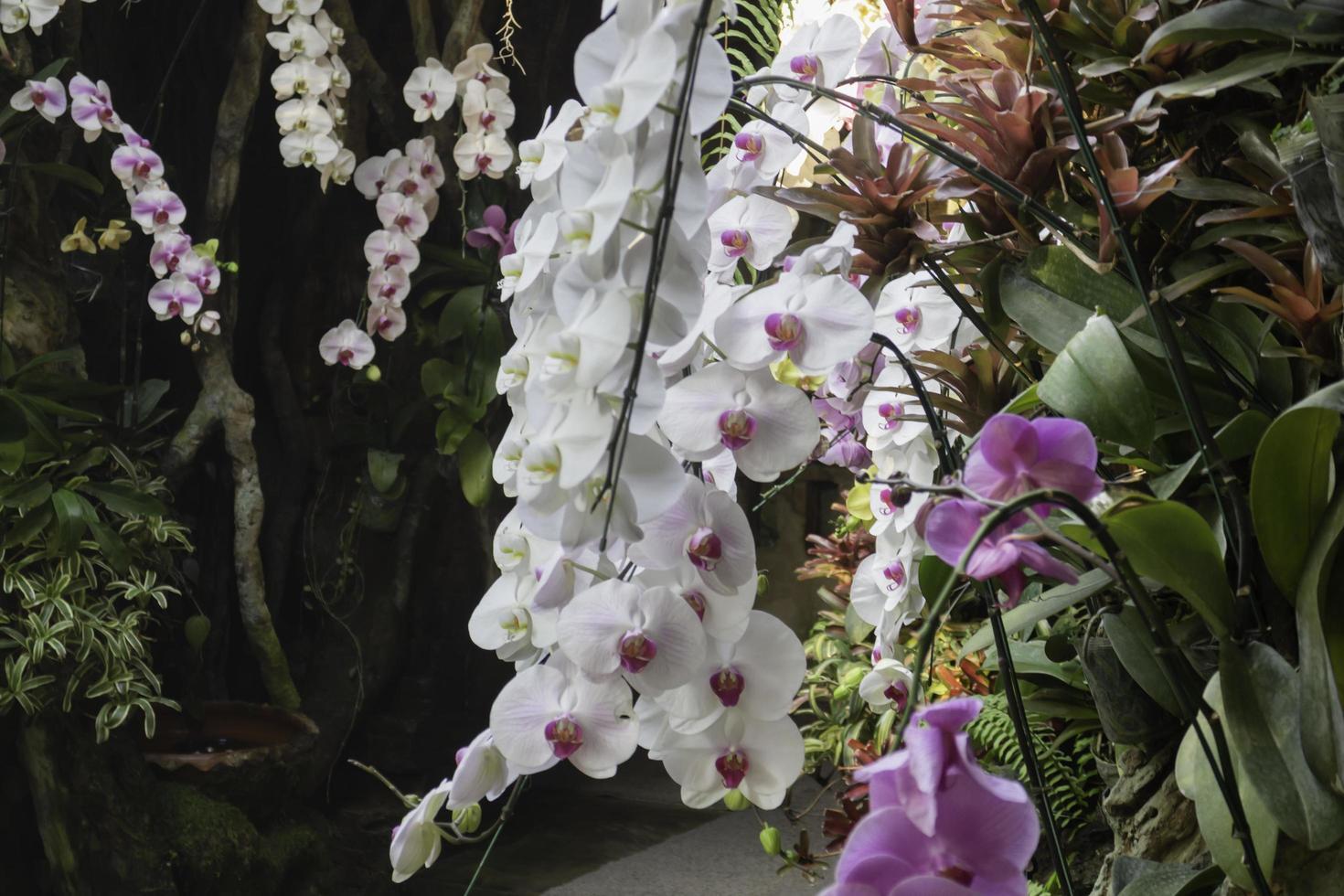 orchidées dans les jardins photo
