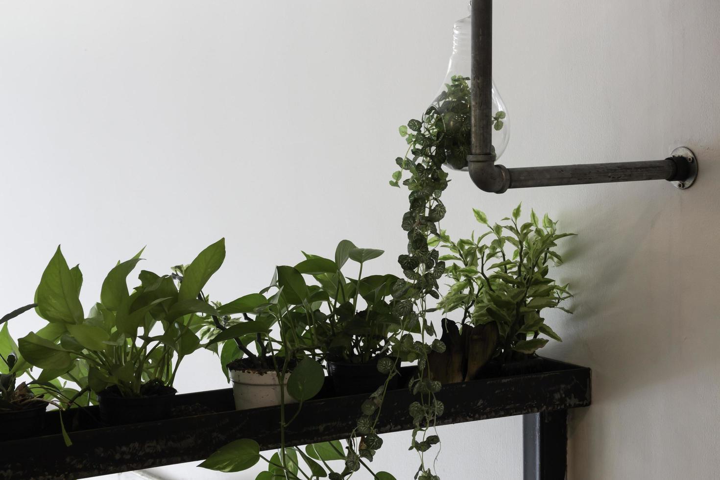 plantes d'intérieur à l'intérieur photo