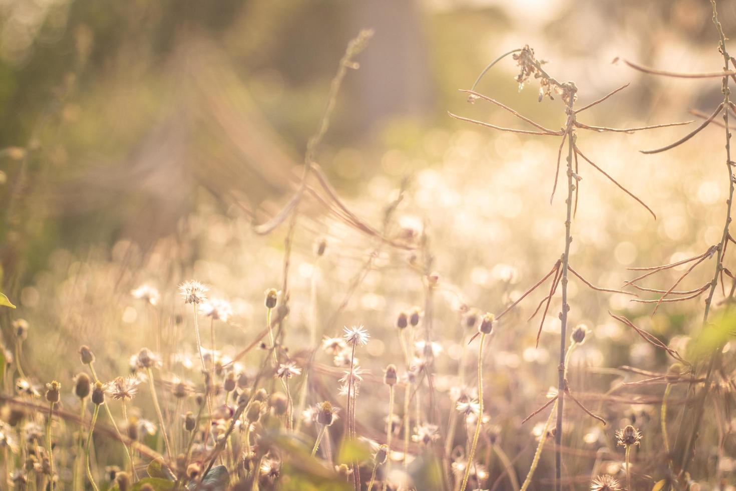 flou de fleurs d'herbe sauvage natured romantique photo