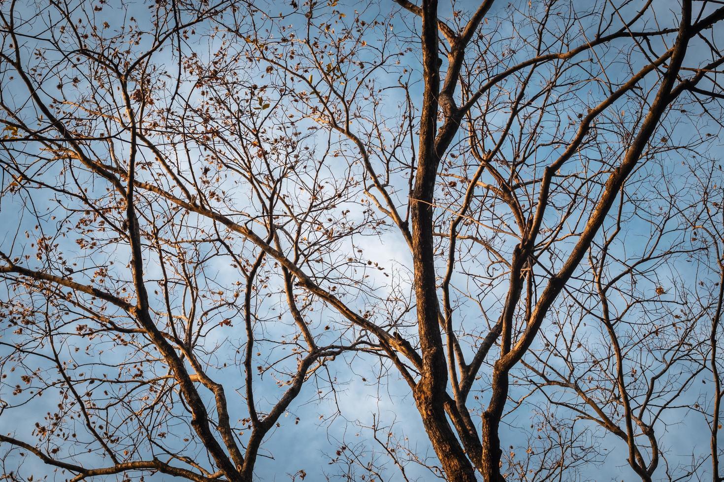 branche d'arbre sur ciel bleu d'hiver photo