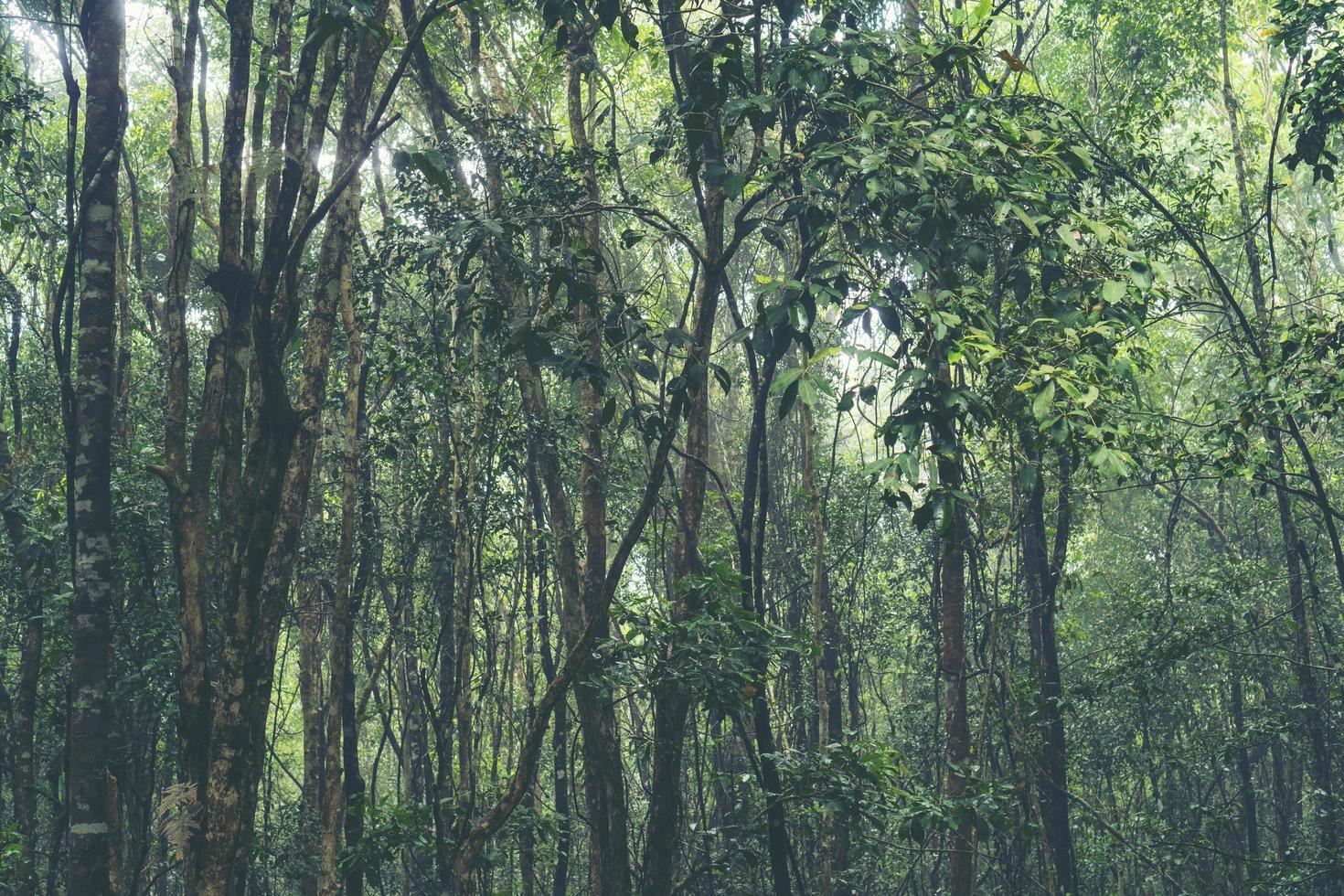 arbres tropicaux dans une forêt photo