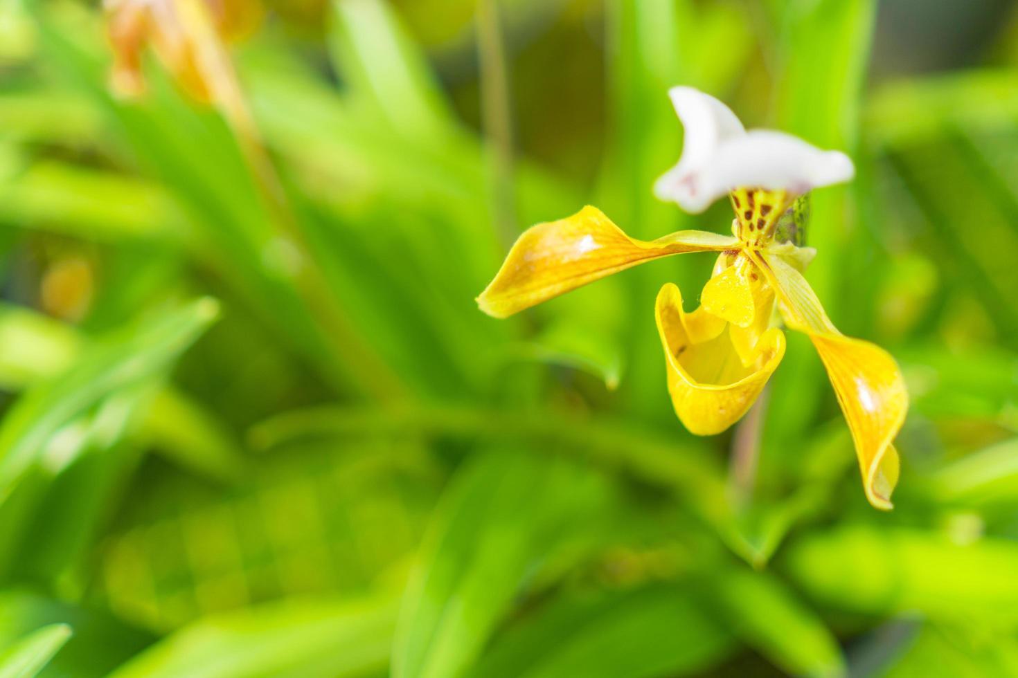 fleur d'orchidée et espace de copie photo