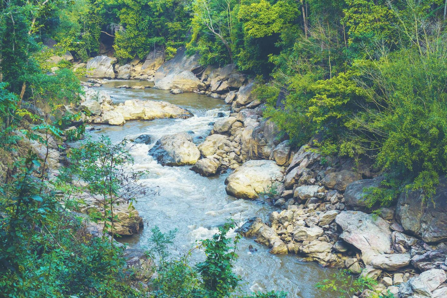 ruisseau dans une forêt photo