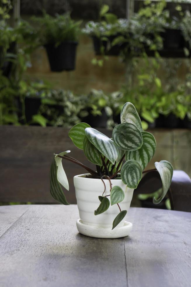 plante à feuilles en pot à l'extérieur photo