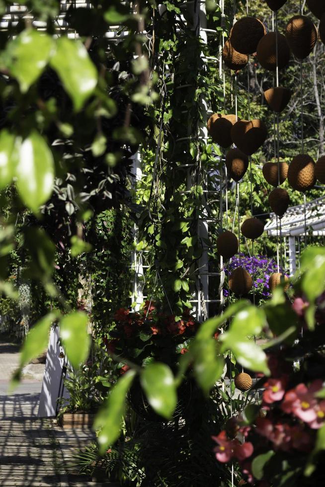 variété de plantes d'été à l'extérieur photo