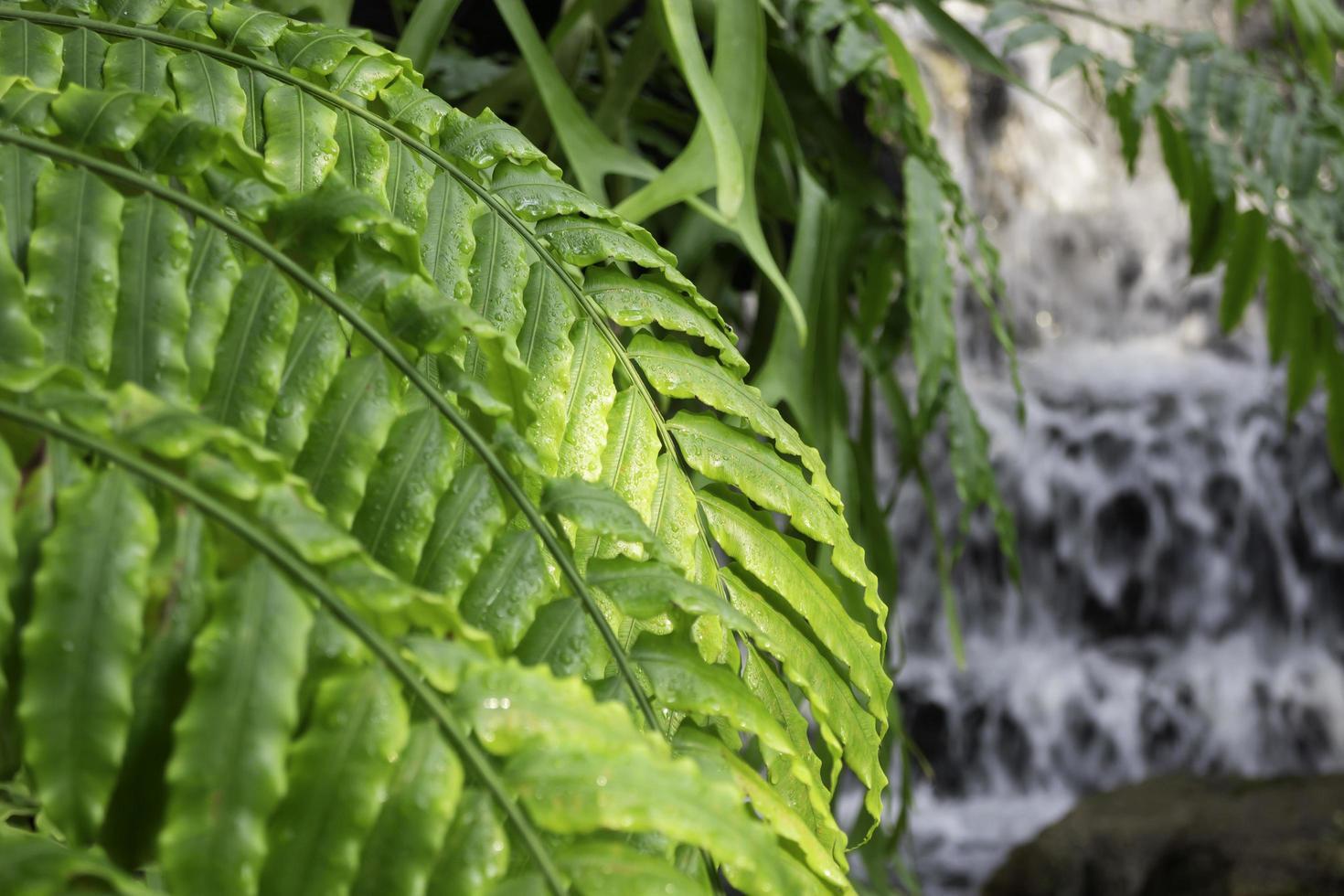 rosée sur les feuilles vertes photo