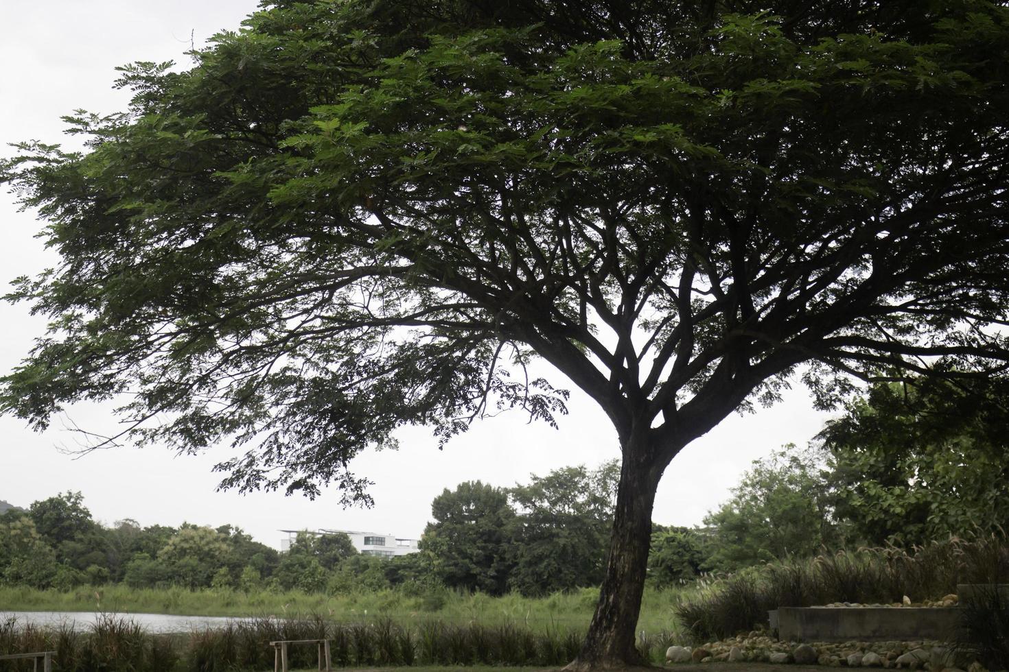 arbre vert dans le champ d & # 39; été photo