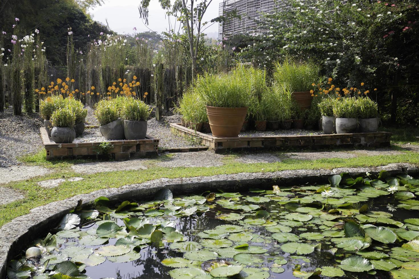 beau jardin avec un étang photo