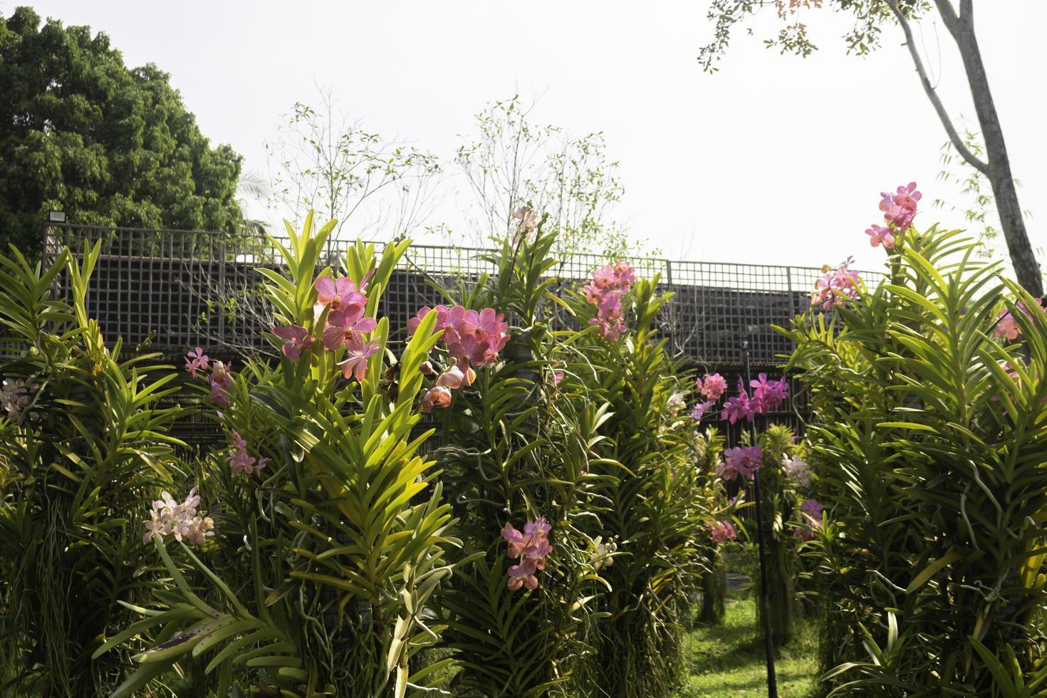 fleurs roses dans le jardin photo