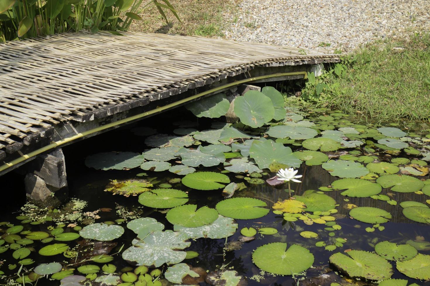 pont sur un étang photo
