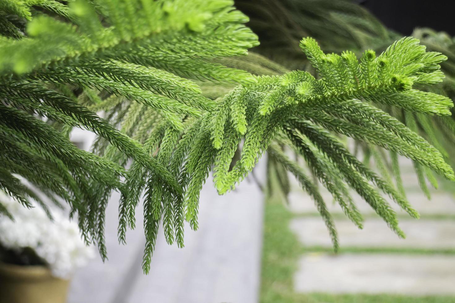 feuilles d'arbre vert photo