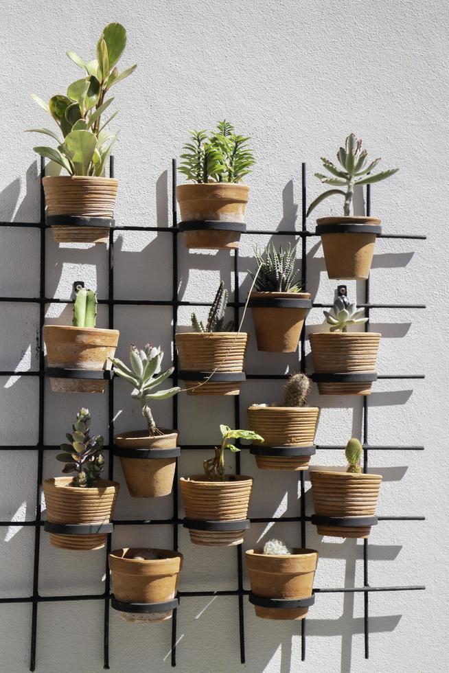 mur de plantes photo