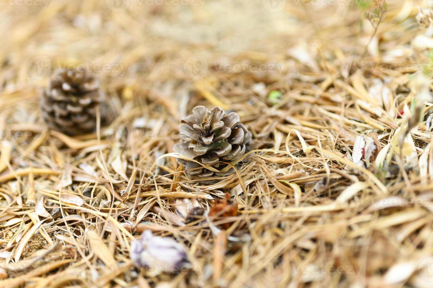 Tas de feuilles d'automne séchées et fanées d'oliviers et de pommes de pin photo