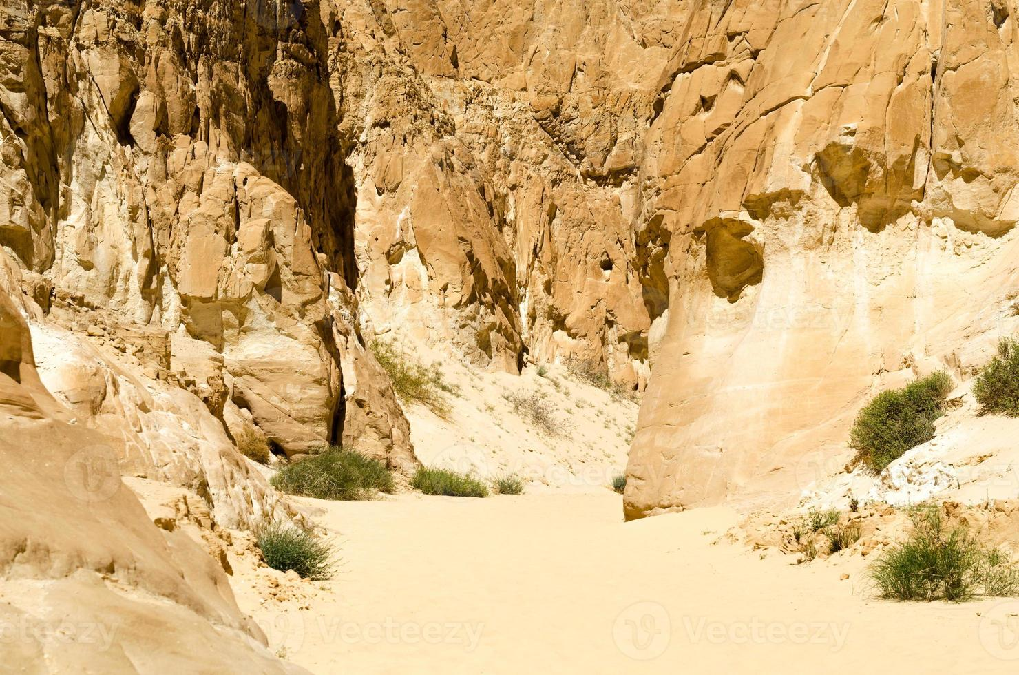 arbustes poussant dans les rochers et le sable photo
