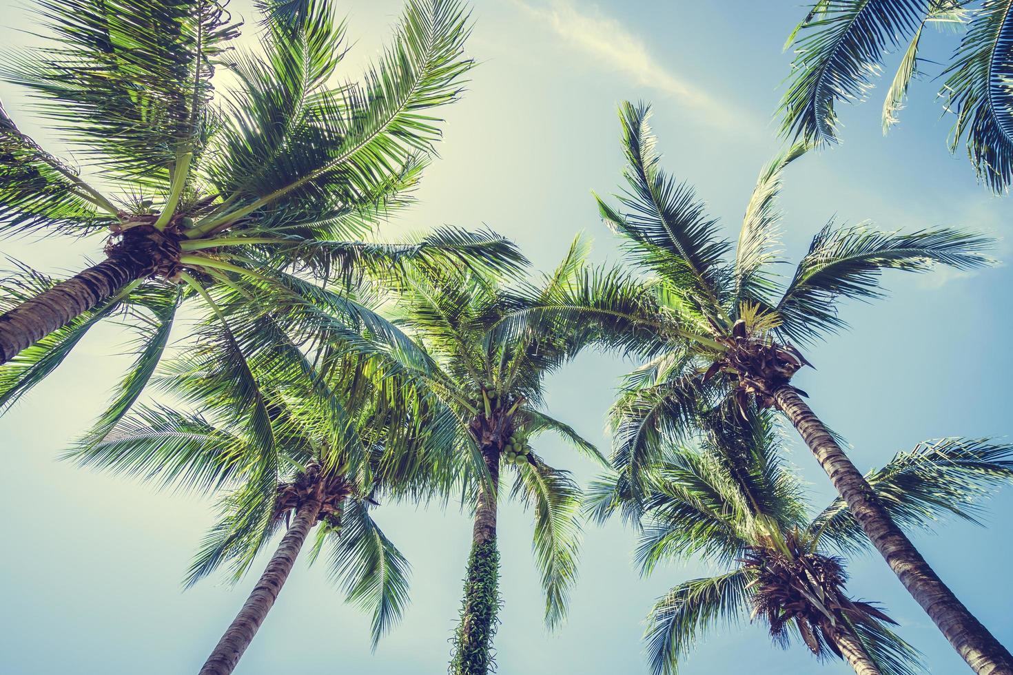 cocotier sur ciel bleu photo