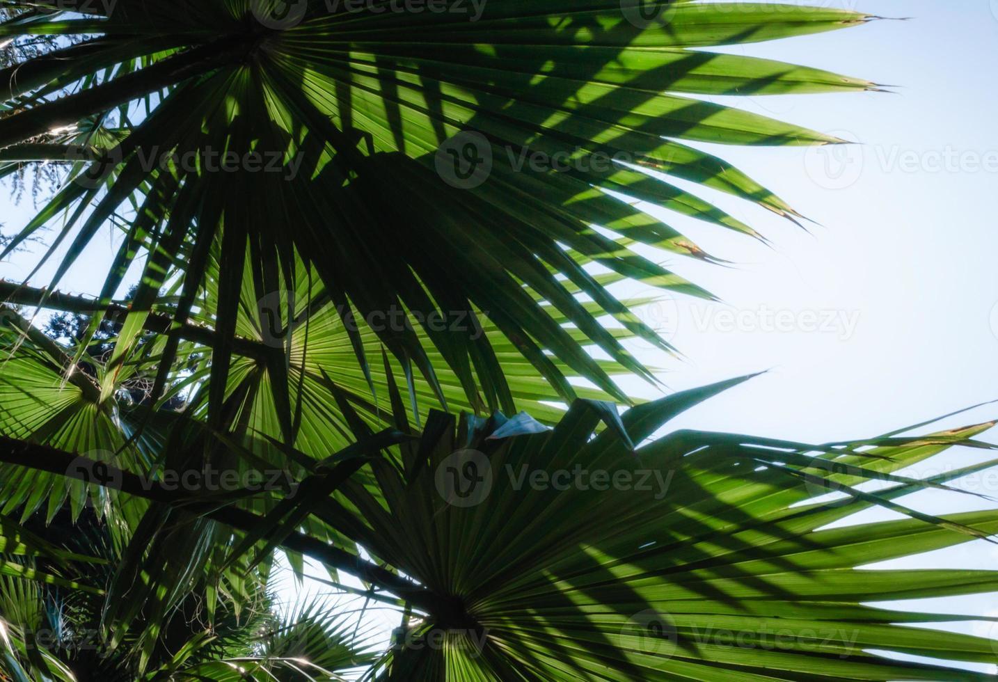 feuilles de palmier contre le ciel bleu photo