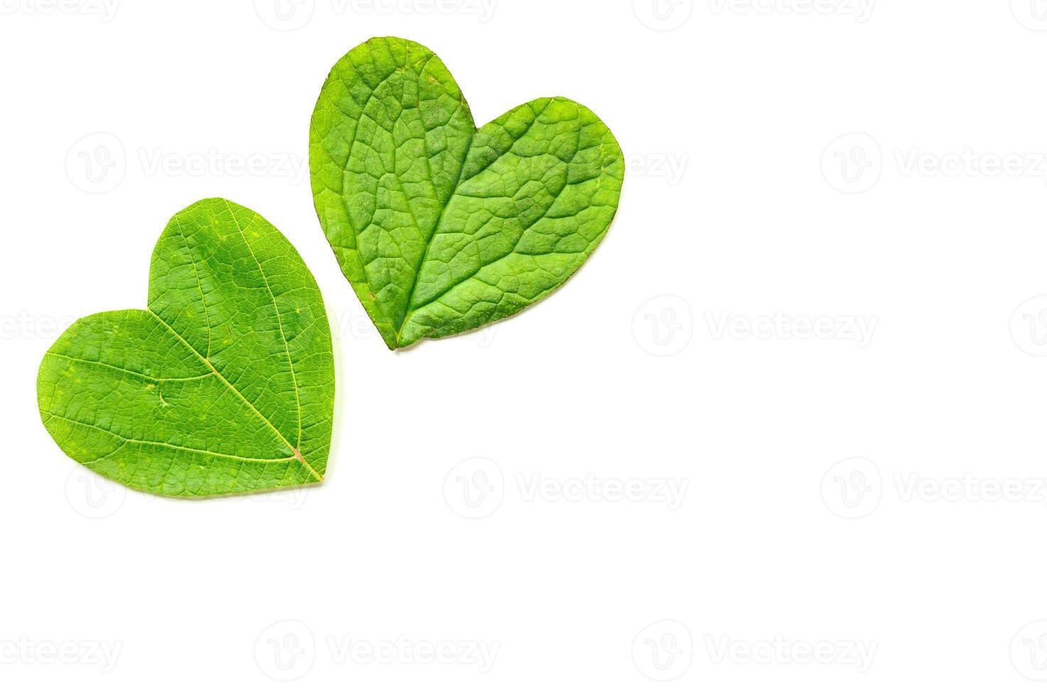 st. La Saint-Valentin. le coeur est coupé du feuillage sur fond blanc photo
