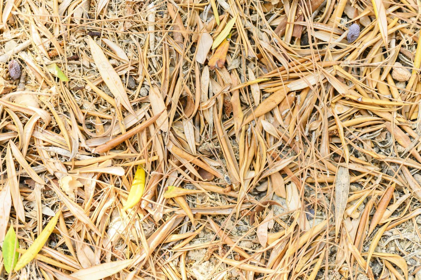 Fond texturé de feuilles d'automne tombées sèches et fanées d'oliviers photo