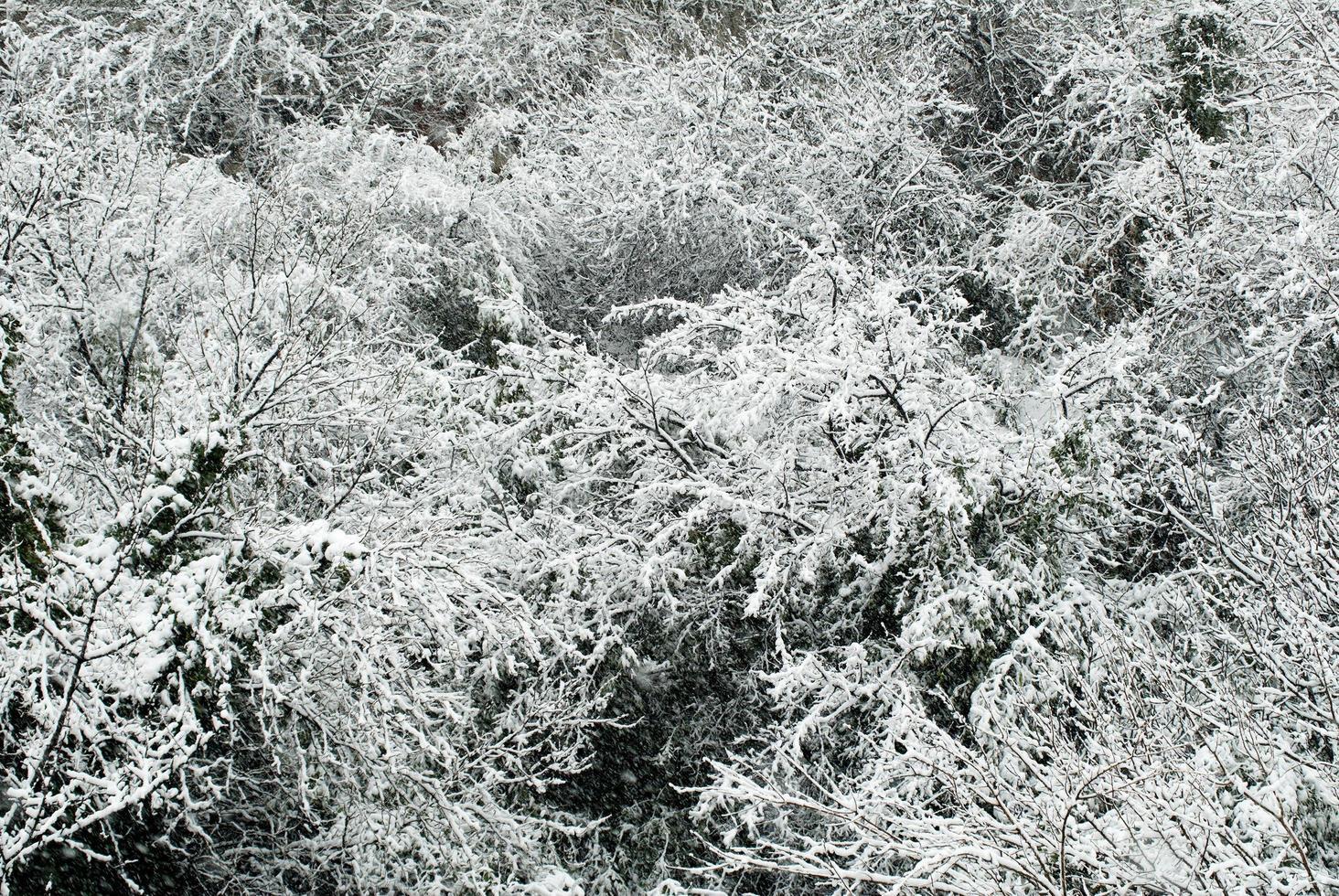arbres couverts de neige photo