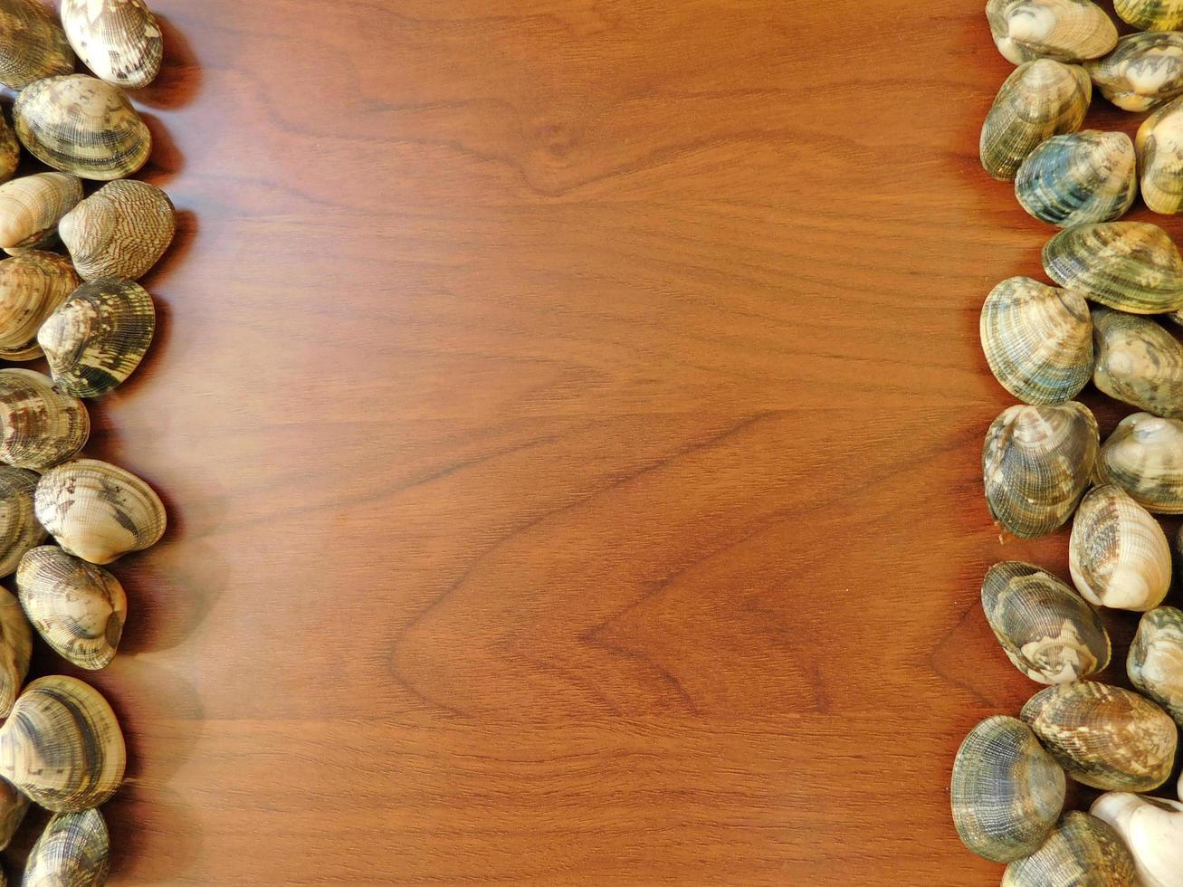 palourdes sur un fond de table en bois photo