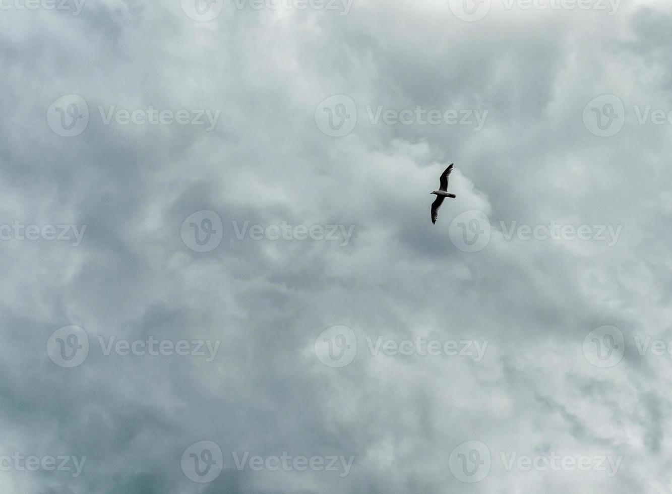 oiseau dans un ciel orageux photo