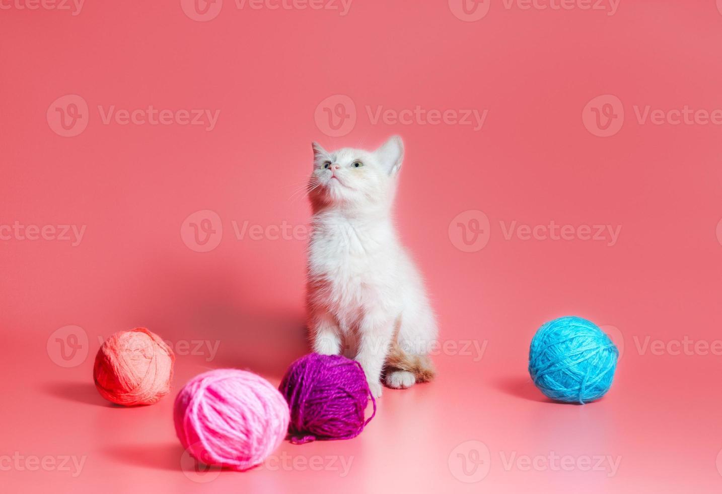 chaton blanc avec des pelotes de laine photo