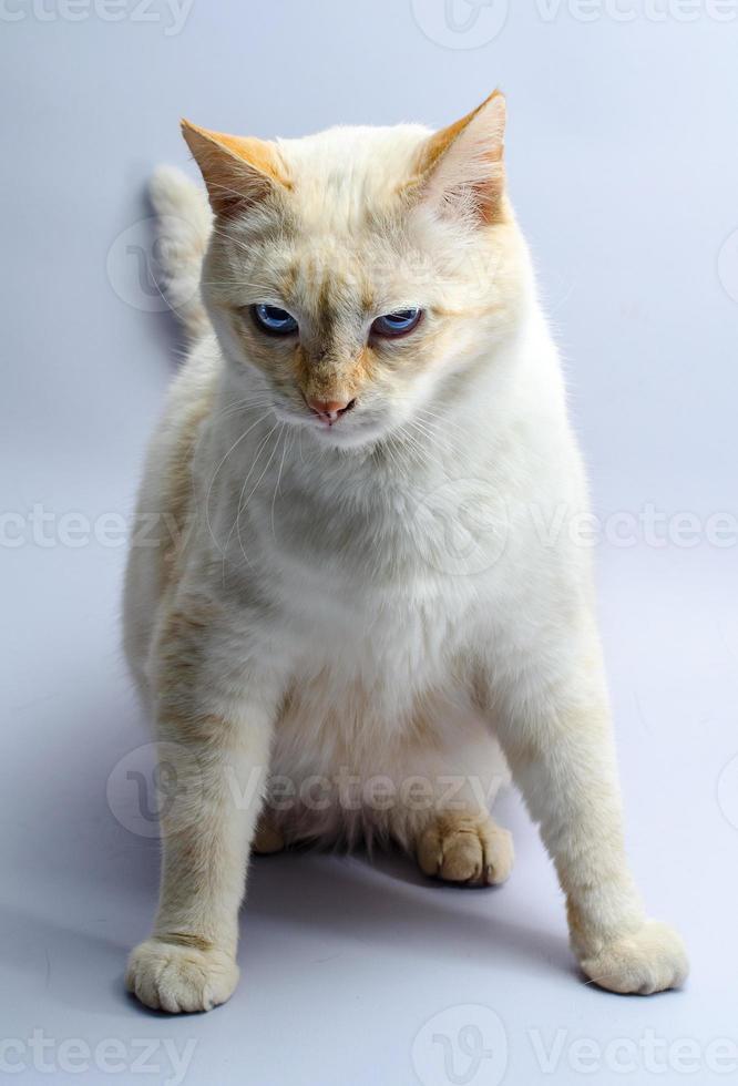 chat orange sur fond bleu photo