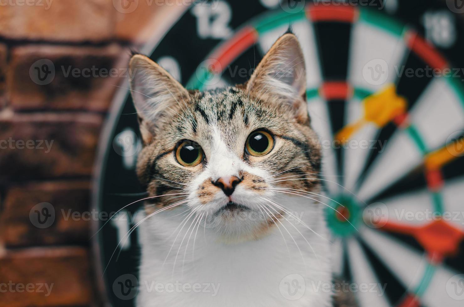 chat devant un jeu de fléchettes photo