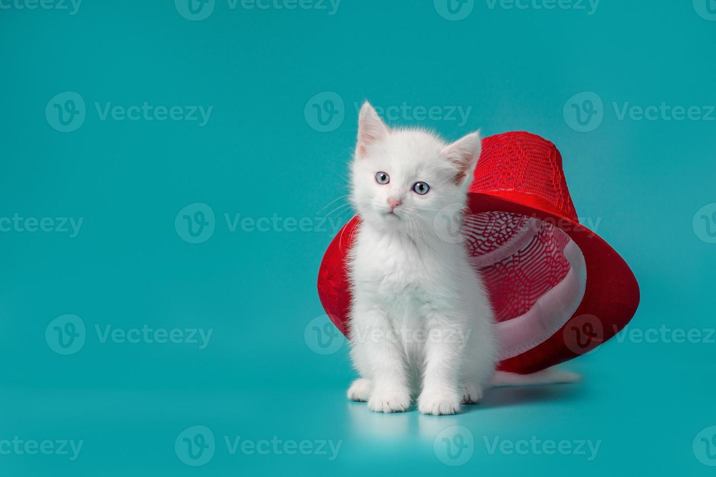 chat blanc avec un chapeau rouge photo