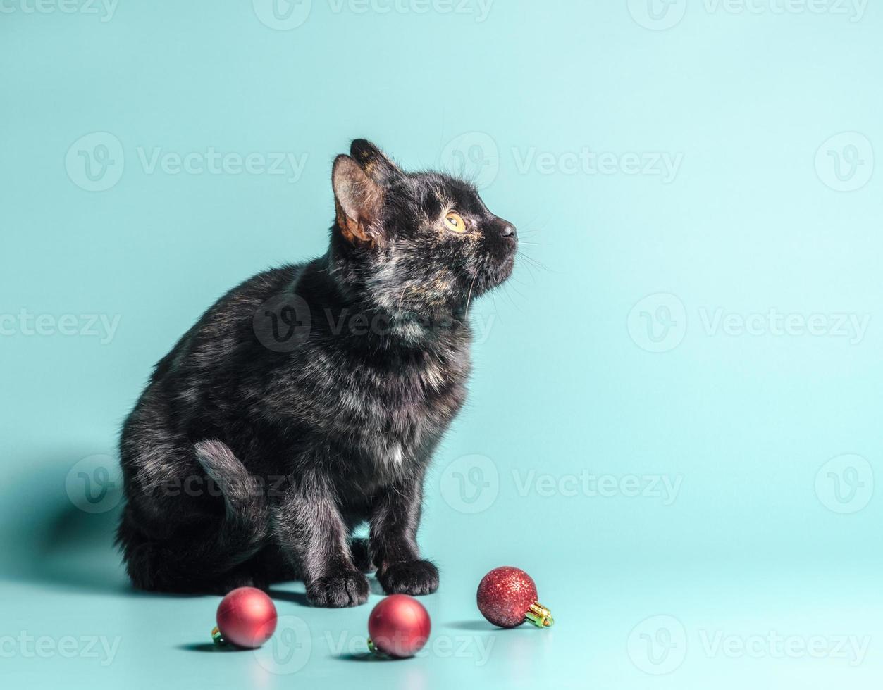 Chat calico foncé avec des boules de Noël photo