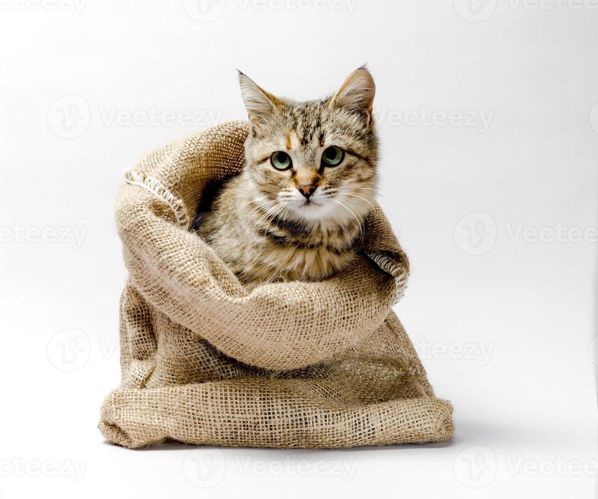 chat dans un sac photo