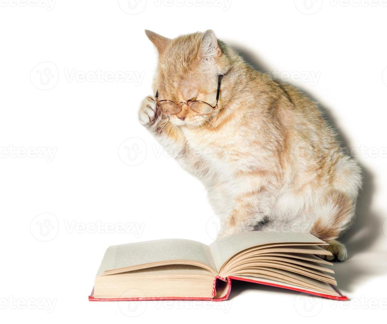 chat portant des lunettes de lecture avec un livre photo