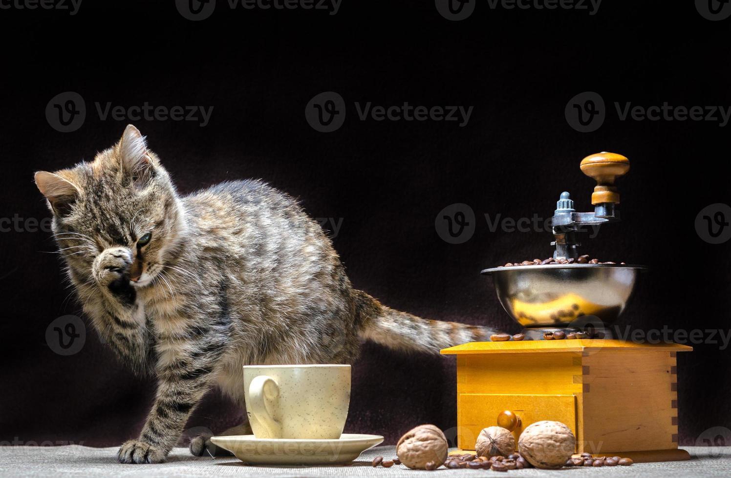 chat avec moulin à café photo