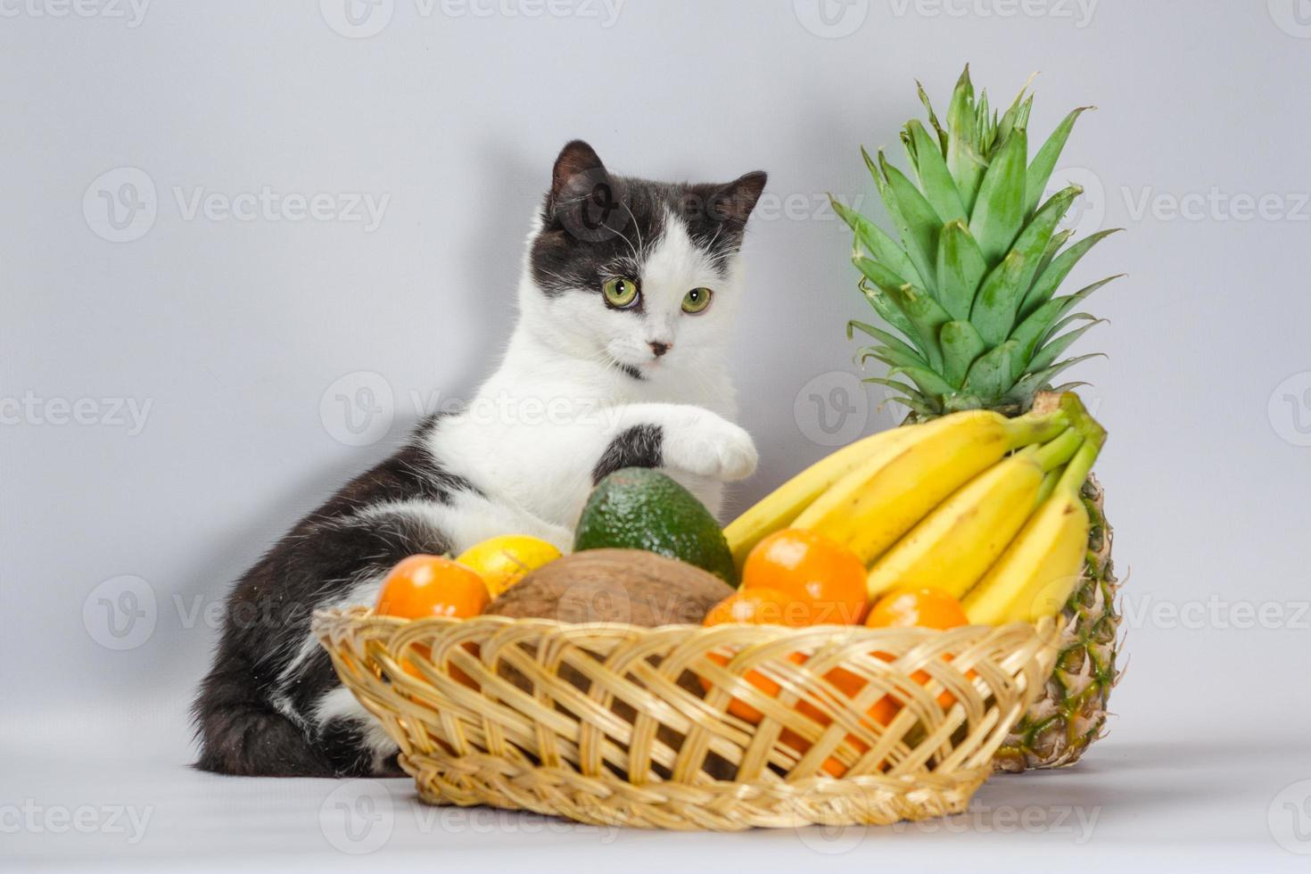 chat noir et blanc avec des fruits tropicaux photo