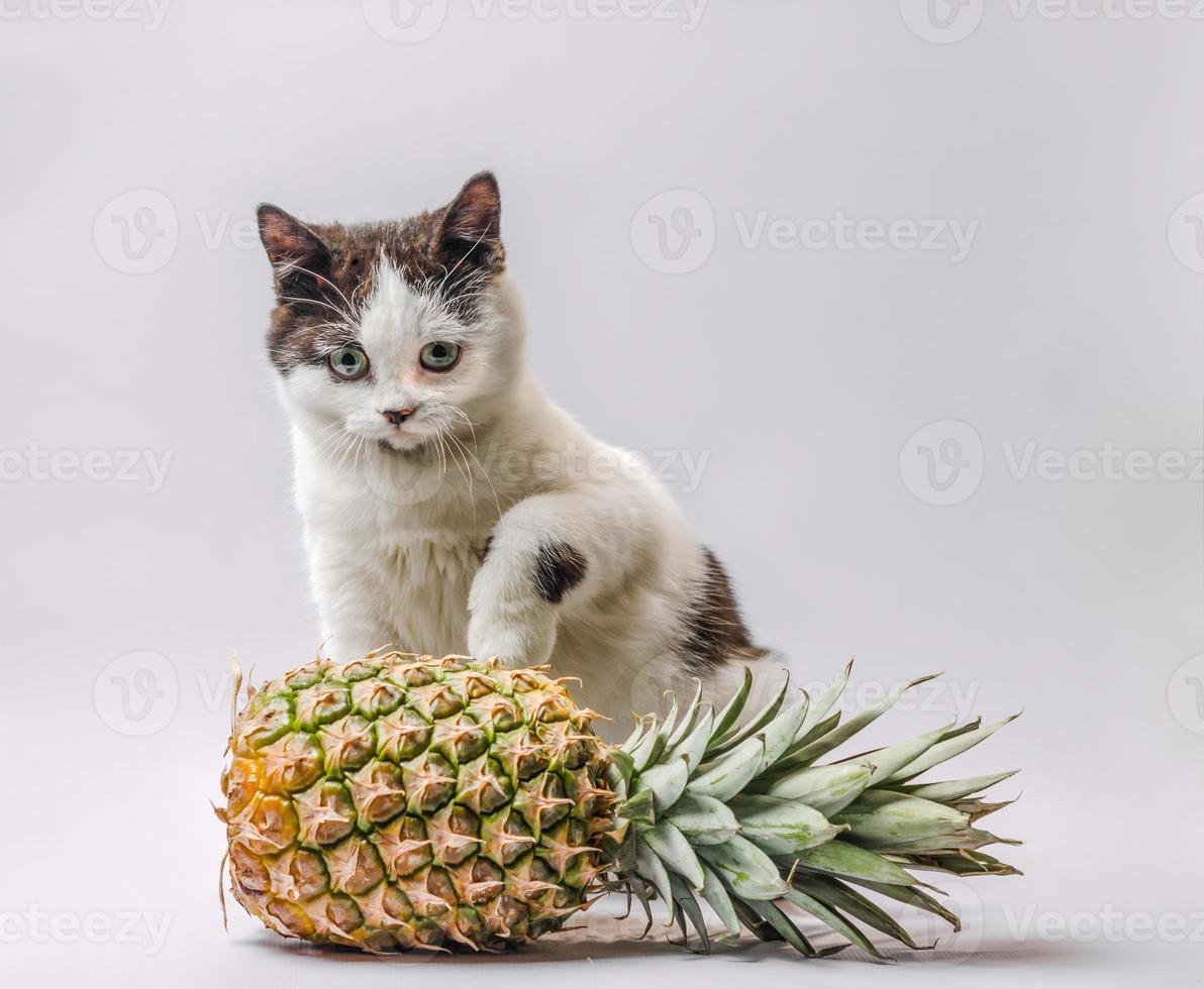 chat avec un ananas photo